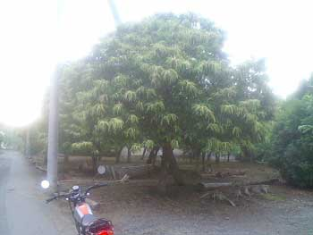 050612-Kuri01